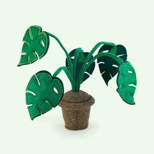Green Kids Depot Monstera Plant