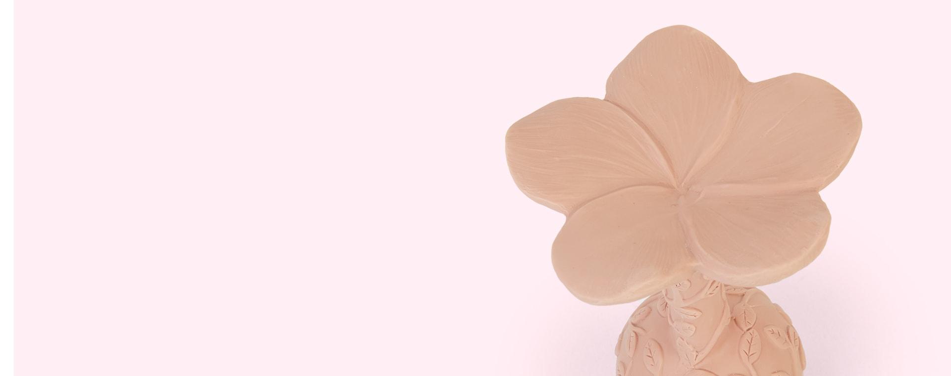Rose Natruba Rattle Plumeria
