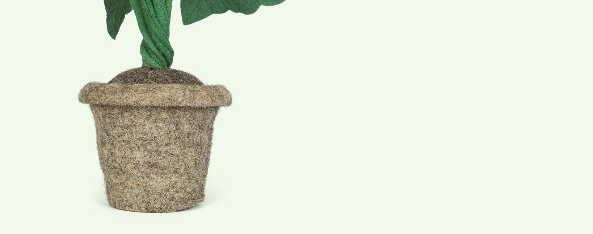 Green Kids Depot Alocasia Plant